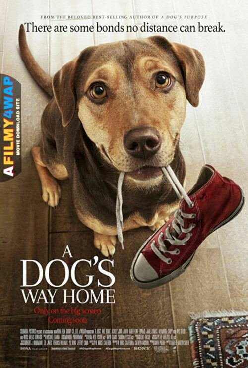 A Dogs Way Home (2019) Hindi Dubbed
